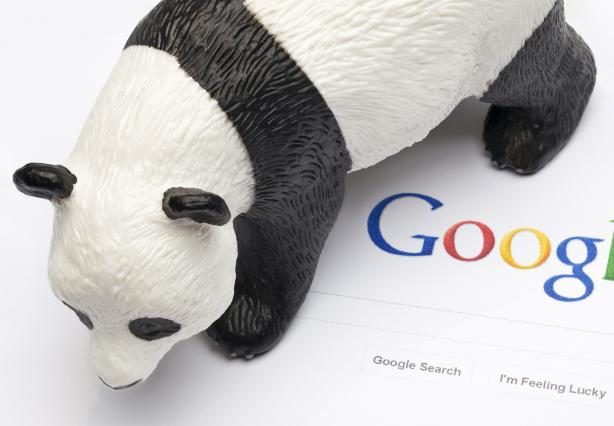 Main image for A History of Google Panda article